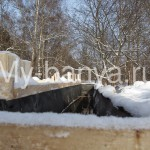 watermarked - IMG_8451